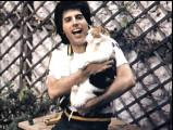 « Delilah », chanson sur un chat, par Queen