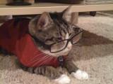 Les proverbes sur les chats