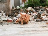 Chat perdu : mon chat a disparu, que faire ?