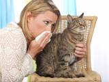Les races de chats les plus hypoallergènes