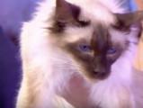 Les stars des chats anti-allergie