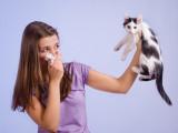 Les allergies liées au chat