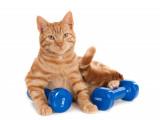 Les articulations et les muscles du chat