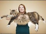 Voici Ludo, le plus grand chat du monde