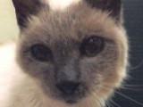Le plus vieux chat du monde est âgé de 30 ans et s'appelle Scooter