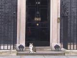 Larry, le chat de David Cameron, vole la vedette à son maître