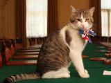David Cameron part sans emmener Larry, le chat du ministère