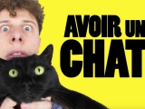 Norman - Avoir un chat