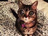 Matilda, le chat alien