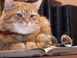 10 chats célèbres dans la littérature