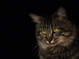 Publicités avec des chats : 10 chats stars de publicité
