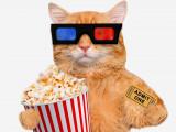 Le chat au cinéma: 10 chats stars dans les films