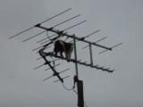 Un chat à l'antenne ...