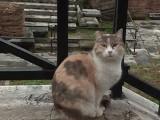 Rome ville éternelle, ville des chats