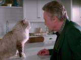 «Ma vie de chat», une comédie d'été avec un chat en vedette