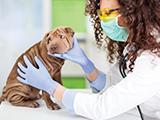 Activités liées aux animaux de compagnie : visites obligatoires du vétérinaire