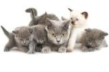 La Belgique va stériliser tous les chats