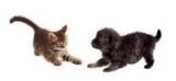Belgique : La mesure de stérilisation des chats en refuge étendue aux éleveurs et particuliers