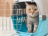 Importation d'un chat (2)