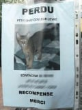 Chien ou chat perdu :  Recueillir oui,  voler non