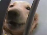 Chiens, Chats : L'Europe doit trancher sur la question de l'expérimentation animale