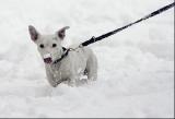 Norvège -  Nouvelle loi de protection des animaux