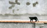 Les chats errants de Pau sous protection
