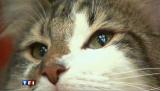 Australie : Sydney impose un couvre-feu... aux chats