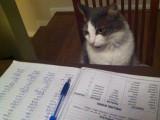 Le pedigree d'un chat et les livres d'origines
