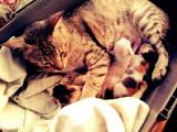 Les démarches légales et administratives suivant la naissance de chatons