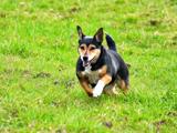 Canada -  série d'actions pour accroître le bien-être animal
