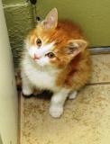 Canada - St Laurent : Votre chat devra être fiché