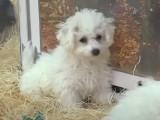 Belgique : infractions à la nouvelle loi sur la vente des chiens et des chats