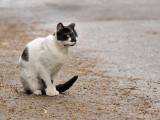Loi N° 99-5 du 6 janvier 99 : animaux dangereux et errants