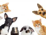 Loi n° 2003-628 du 8 juillet 2003 : protection des animaux de compagnie