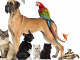 Décret n° 2008-871 du 28 août 2008 : protection des animaux de compagnie
