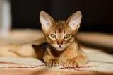 Identification des chats : la loi devant le Conseil constitutionnel