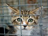 Protection des animaux : législation et droit des animaux