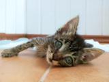 Loi et sanctions contre la maltraitance animale