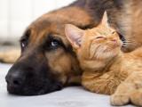 Identification des chiens et des chats en France : ce qui a changé en 2011