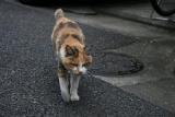 Suisse - Le Conseil fédéral refuse d'interdire la chasse aux chats errants