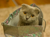 La vente de chatons