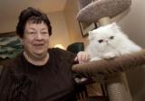 Canada - Le Noël des chats débarque à Laval
