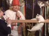 Le théâtre des chats de Moscou cartonne