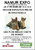 Belgique - Les plus beaux chats du monde