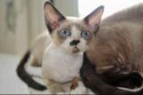 Qui sera le plus beau chat de la Réunion ?