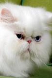 Charleville-Mézières (08) Le chat tient salon au parc-expo