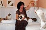 Saint-Genis-de-Saintonge (17) Les chats vont être un peu cabots