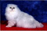 AIX LES BAINS (73) 270 chats de race vont défiler au casino