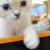 Retour en images sur le Baltard Feline Show 2011
